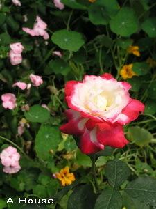 2008五月花季9