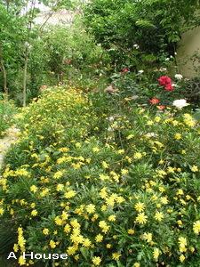 2008五月花季11