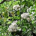 2008五月花季14