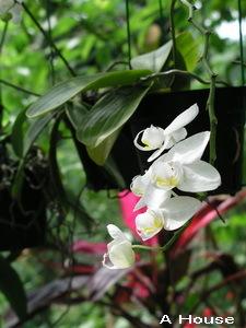 2008五月花季15