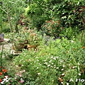 2008五月花季16