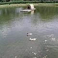 四方牧場:湖