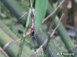 蜘蛛(3y2w)
