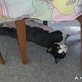 安安睡棉被下面