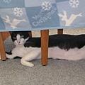 媽媽換晒被子,安安又躲到下面睡
