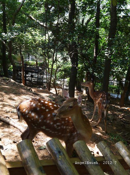 新竹動物園(2012.7)