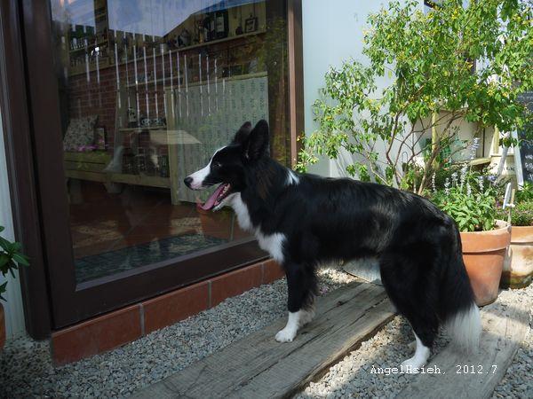 100牧場 別人家的狗(2012.7)