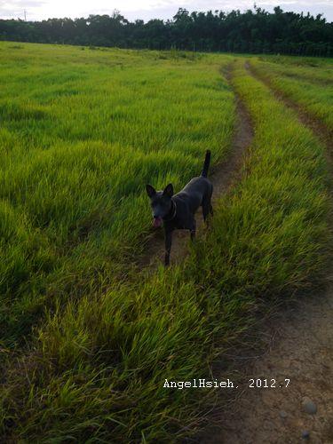 瑞米in青青草原