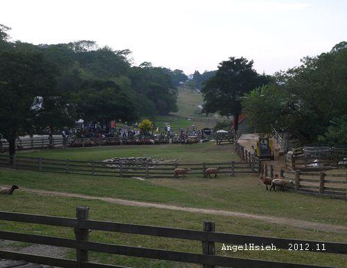 飛牛牧場(2012.11)