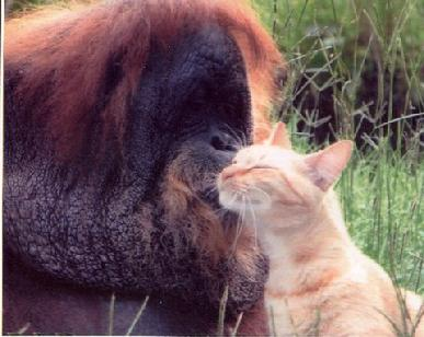 Tonda and T.K. (from Zoo World.com)