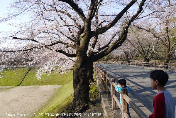 離開熊本城及加藤清正宮,往監物台樹木園的路上。