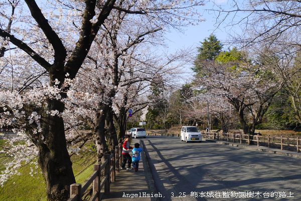 整個山上到處有花樹豎立於馬路二旁— 在監物台樹木園
