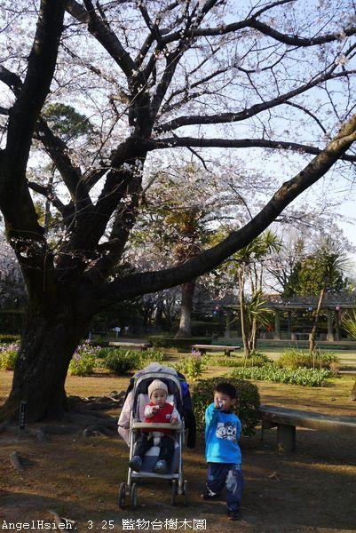 其實是二哥正在提醒小弟看鏡頭...— 在監物台樹木園