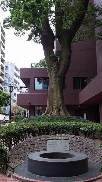 熊本市裡的神木和古井