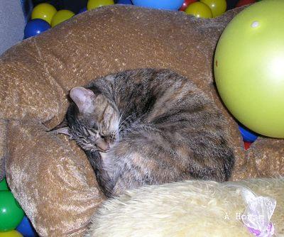 小芸睡在遊戲床的大狗娃娃上