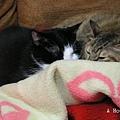 安安和可樂擠毛毯