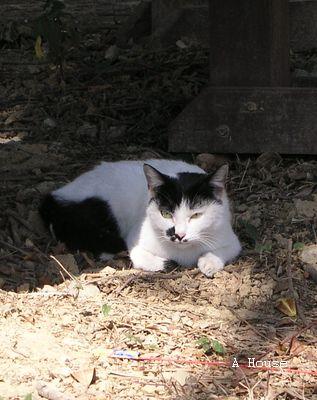 新竹文化中心對面公園的貓(2008.1)
