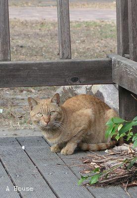 高雄婆家附近的流浪貓2008.2