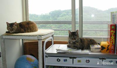 左:樂樂,右:小芸,2009年5月