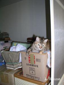 從後陽台照樂樂住套房(2009.8)
