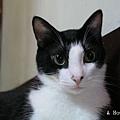 安安,2004年7月攝