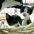 安安與壽司(2002年12月)
