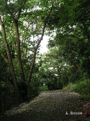 巨埔古道(2011.5)