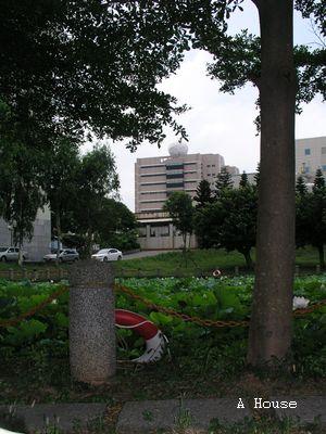 交大荷花池(2010.7)