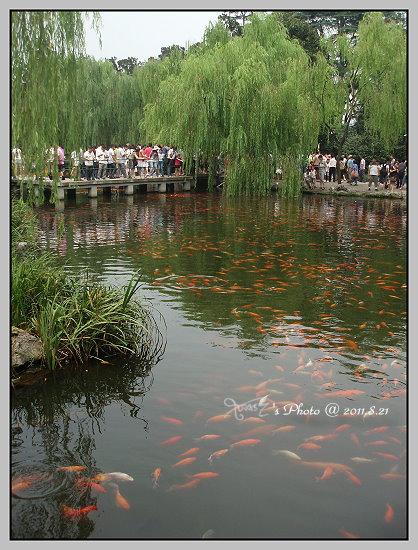 杭州西湖一日遊20.JPG