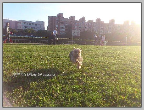 狗狗曬太陽1