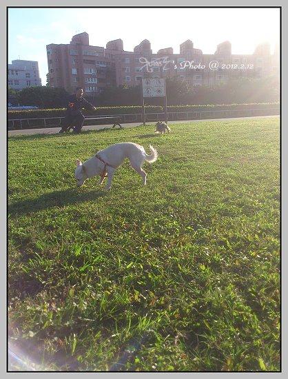 狗狗曬太陽3