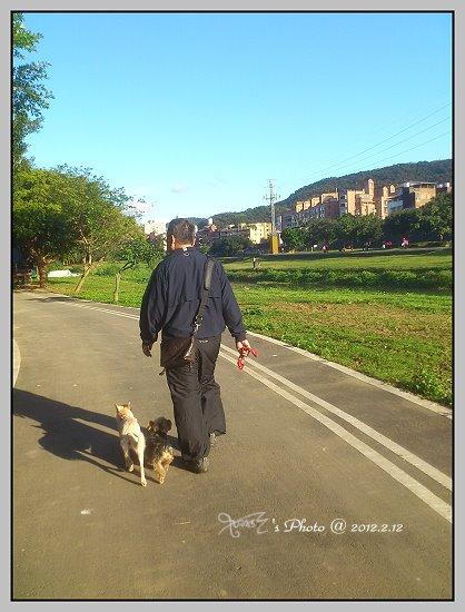 狗狗曬太陽2