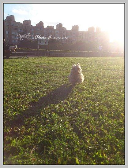 狗狗曬太陽4