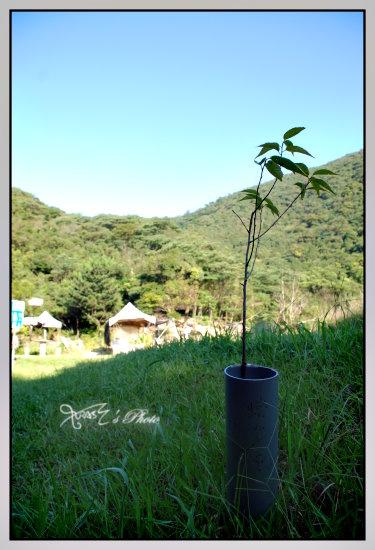 新山夢湖的小小故事14.JPG