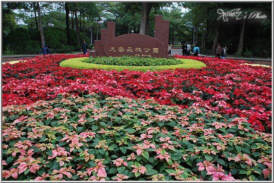 大安森林公園花卉展1.JPG