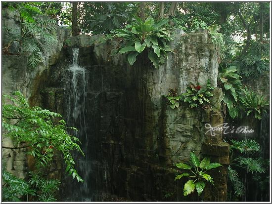 熱帶雨林植物園4.JPG
