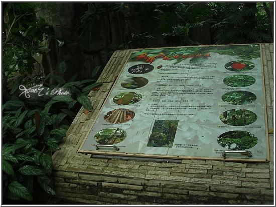 熱帶雨林植物園5.JPG