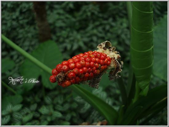 熱帶雨林植物園6.JPG