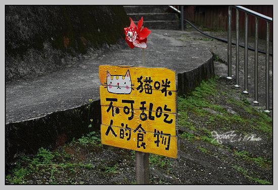 猴洞貓村15.JPG