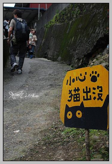 猴洞貓村1.JPG