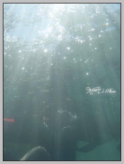 泳渡日月潭36.JPG