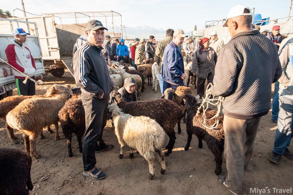 中亞吉爾吉斯∣在Karakol遇見最大動物市集