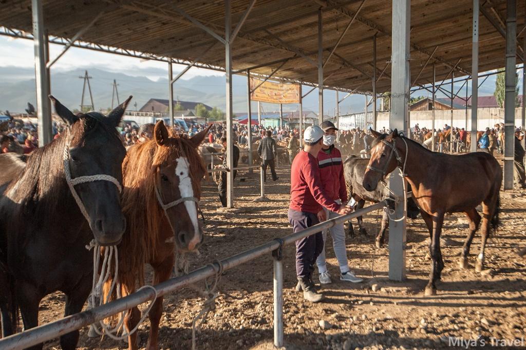 中亞吉爾吉斯∣在Karakol遇見最大動物市集Animal market(含交通資訊)