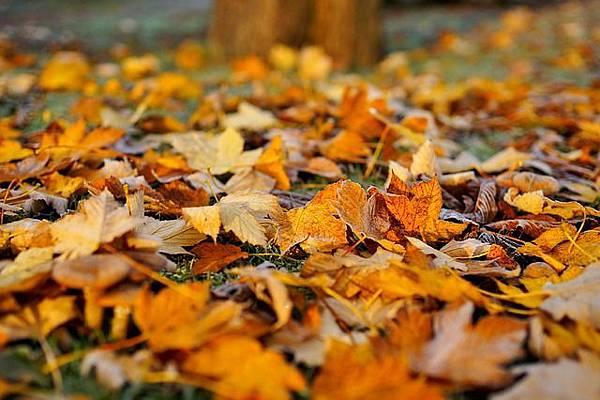 leaves-1818625_640.jpg