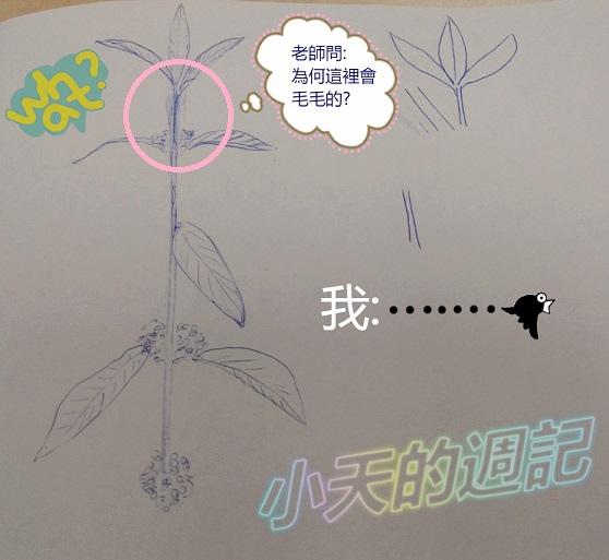 【課程體驗】優雅客原子筆畫插畫入門班 御音本主講10.jpg