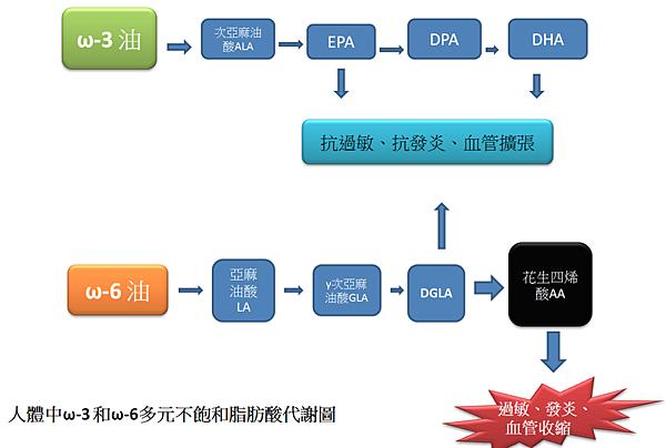 脂肪酸代謝圖