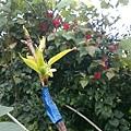 FB_IMG_13947559615139488.jpg