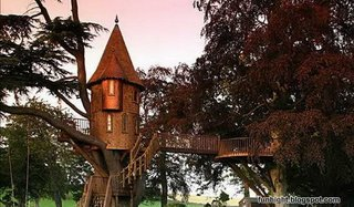 樹屋1.jpg