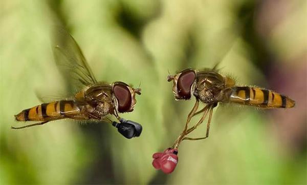 蜜蜂.jpg