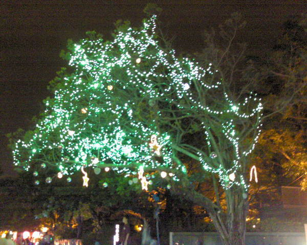 中央公園(晚上1)